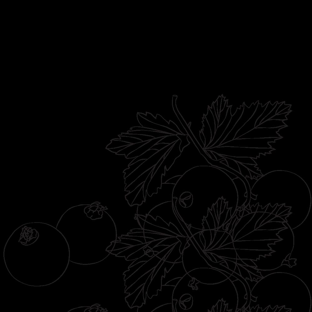 Organic Blackcurrant hydrosol
