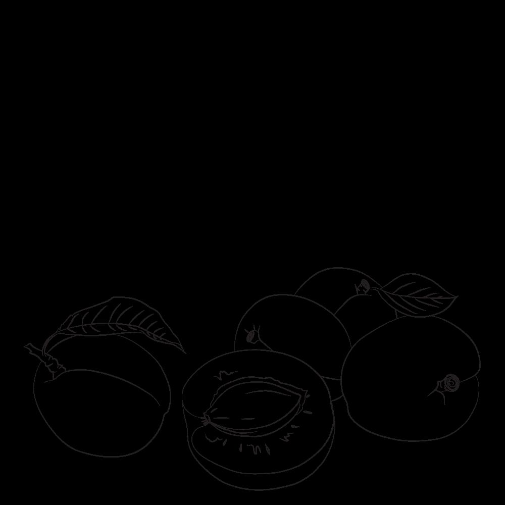 amandons d'abricots biologiques