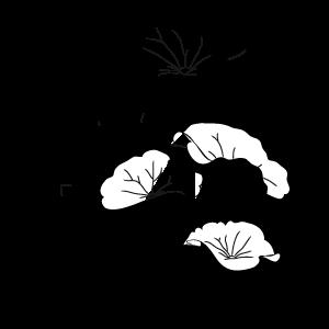 organic centella asiatica extract